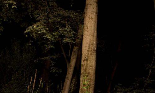 Deriva escuela de fotografía en Granada Hacia la noche taller de fotografía docente Pablo Trenor